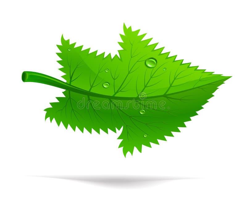 Folha verde ilustração royalty free