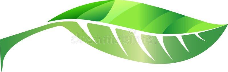 Folha verde bonita ilustração royalty free
