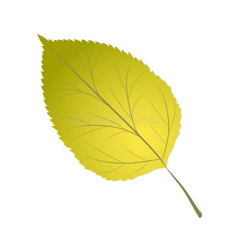Folha verde-clara da árvore de vidoeiro amarelo do anf na ilustração branca, conservada em estoque do vetor ilustração stock