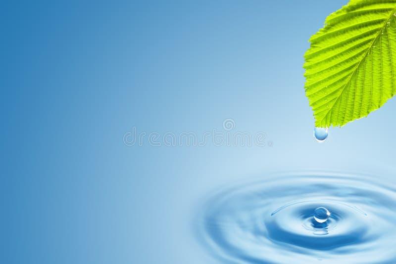 Folha verde com espirro de gotas da água. imagem de stock