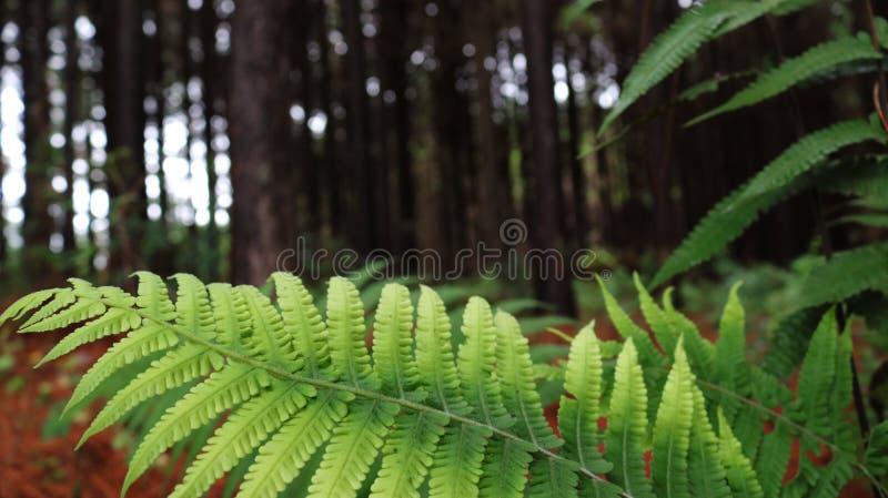 Folha verde com a floresta no fundo fotos de stock royalty free