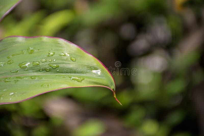 Folha verde com gota da água foto de stock
