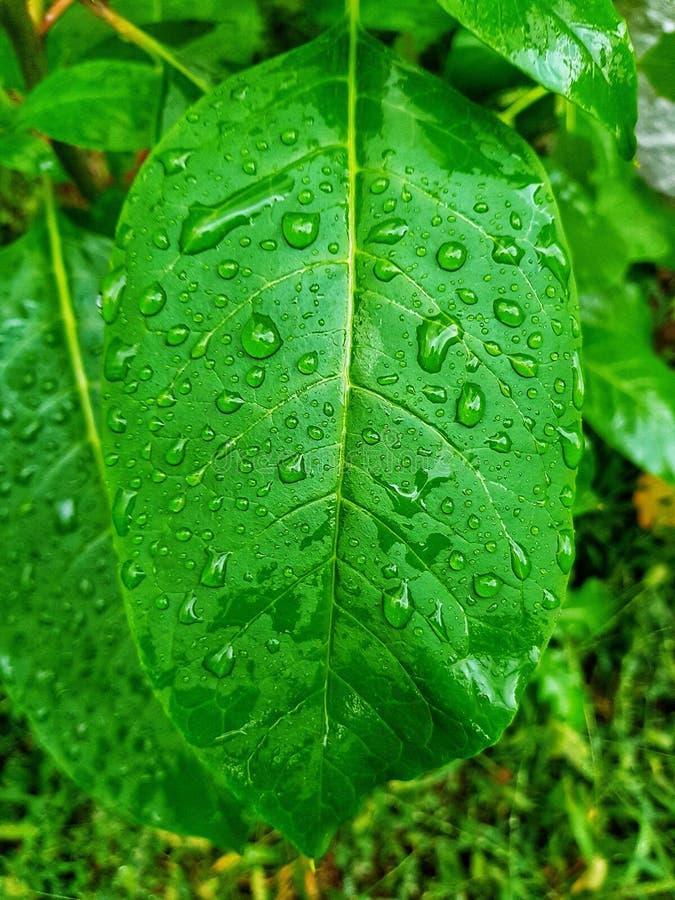 folha verde com gotas da água ilustração stock