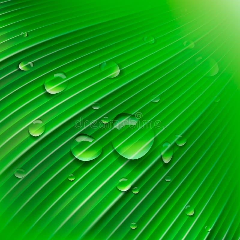 Folha verde com gotas da água ilustração royalty free