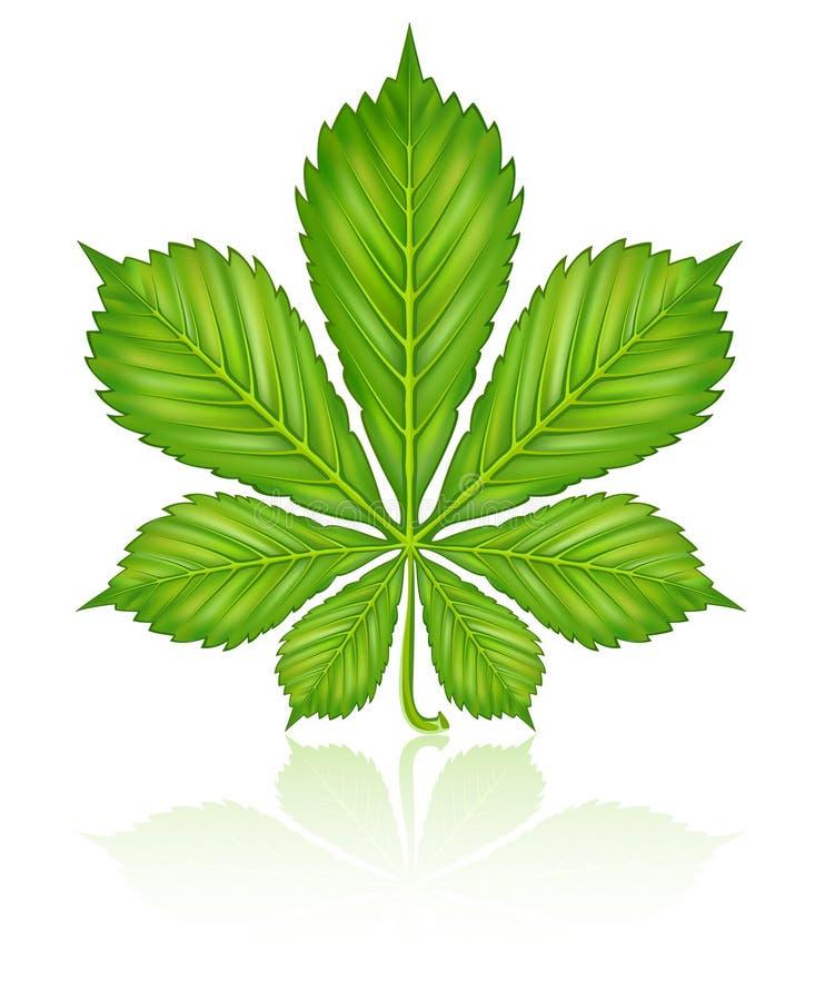 Folha verde da árvore de castanha isolada ilustração stock