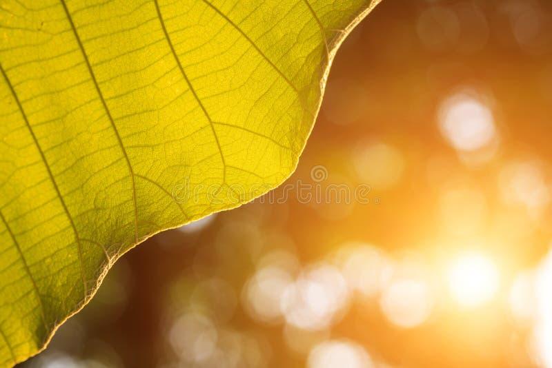 Folha verde da árvore no parque com sumário do sunl da natureza do borrão imagem de stock