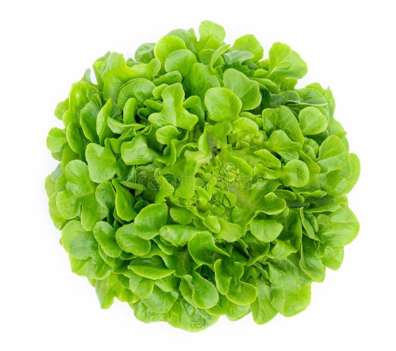 Folha verde da alface do carvalho isolada no fundo branco fotos de stock