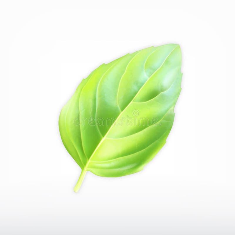Folha verde da manjericão ilustração do vetor