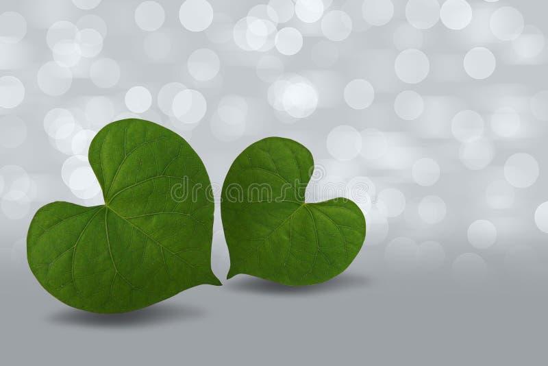 Folha verde dada forma coração no fundo do bokeh fotos de stock
