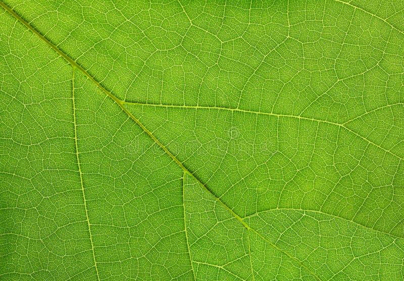 Download Folha Verde De Um Fim Do Macro Da Planta Acima Foto de Stock - Imagem de folhas, planta: 65576976