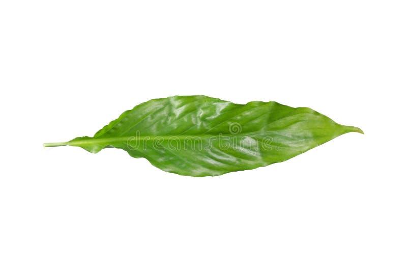 Folha verde de uma planta fotos de stock