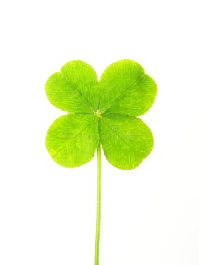 Folha verde do trevo fotos de stock