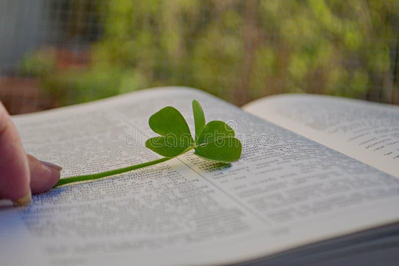 Folha verde do trevo entre páginas abertas no livro fotos de stock