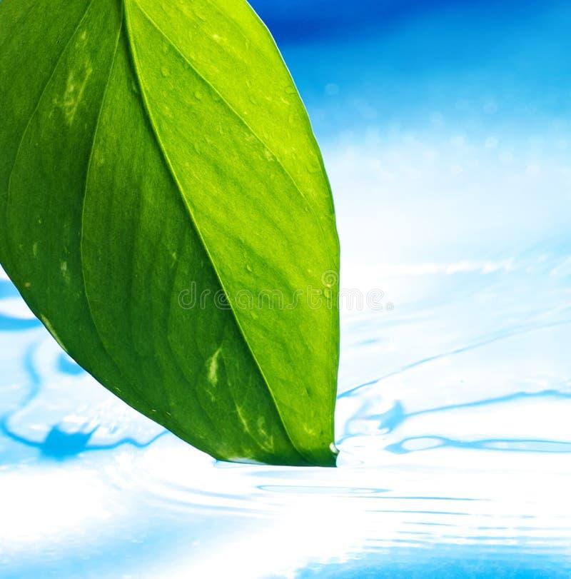 Folha verde e água azul do espaço livre imagens de stock royalty free