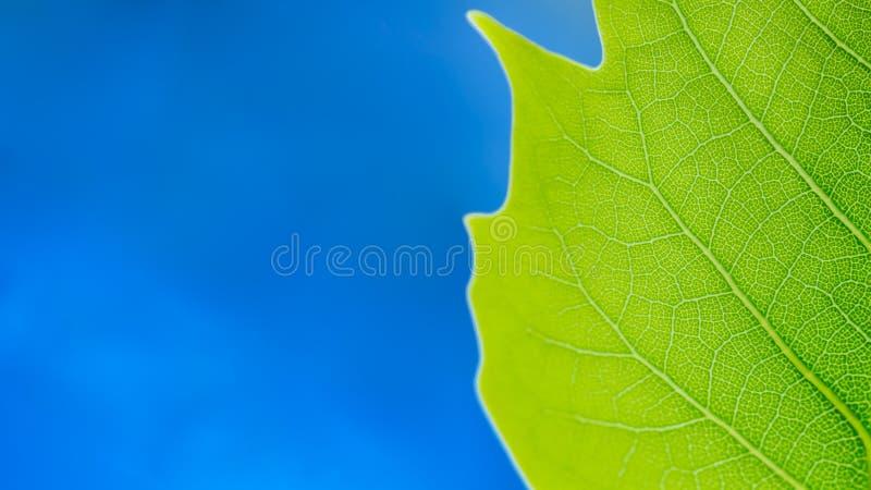 Folha verde e céu azul Conceito da ecologia da natureza foto de stock royalty free