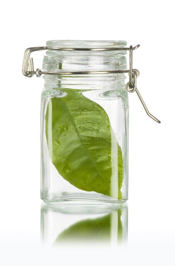 A folha verde em um frasco conserva a terra fotos de stock