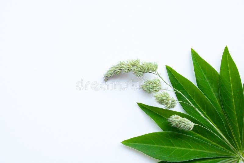 Folha verde em um fundo branco imagens de stock