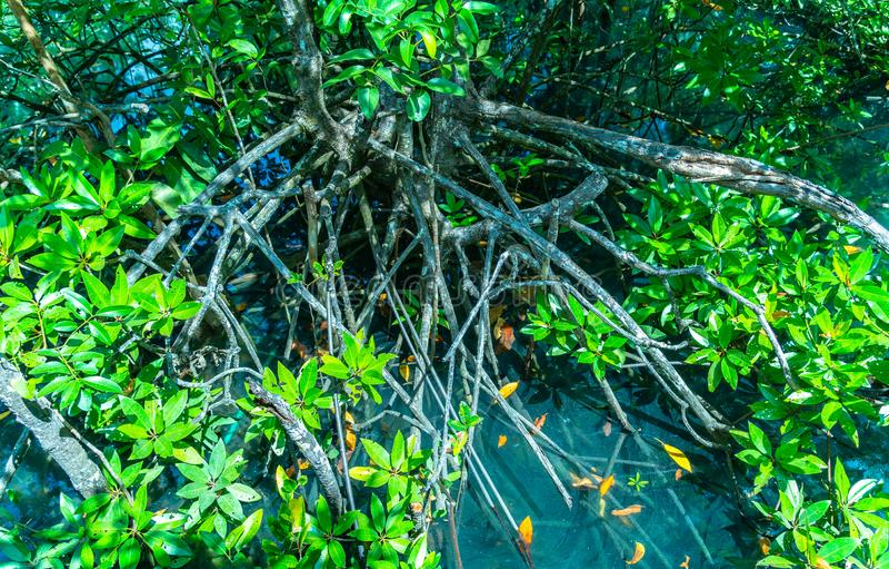 Folha verde em um pântano completo o lugar da água verde esmeralda foto de stock royalty free