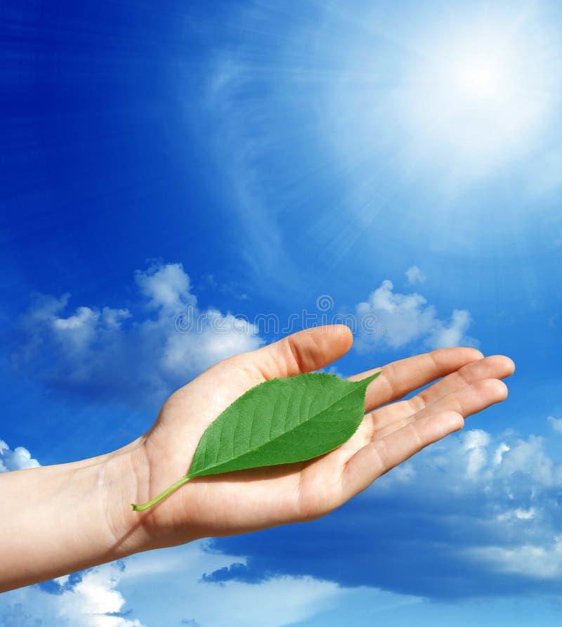 Folha verde em uma mão humana fotografia de stock royalty free
