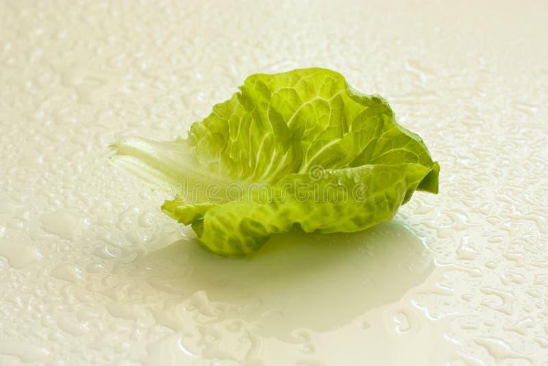 Folha verde fresca da alface foto de stock royalty free