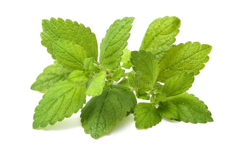 Folha verde fresca do melissa. Erva-cidreira foto de stock royalty free