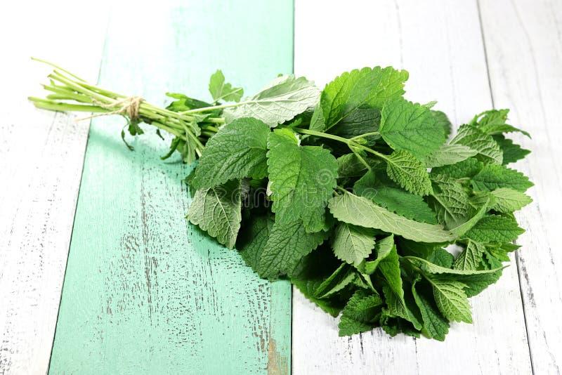 Folha verde fresca do melissa sobre o branco fotografia de stock