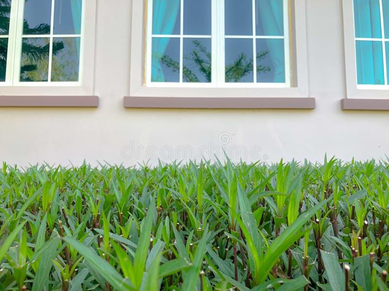 Folha verde na frente da casa perto da janela fotografia de stock royalty free