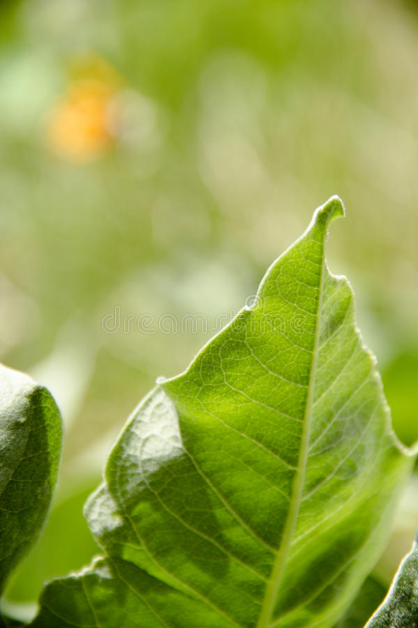 Folha verde na luz solar imagens de stock