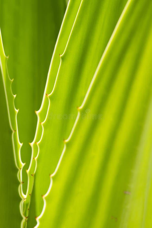 Download Folha verde imagem de stock. Imagem de botanical, vida - 29826205