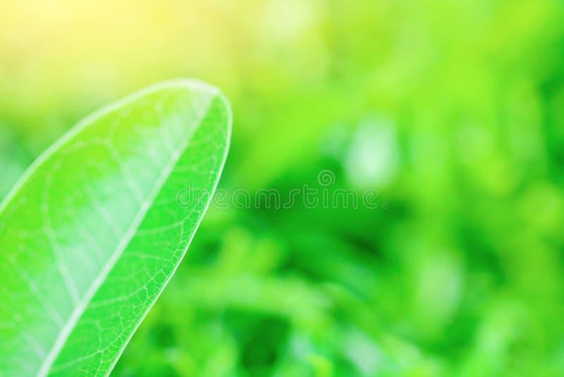 Folha verde no jardim imagem de stock royalty free