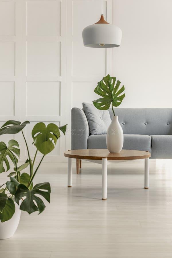 Folha verde no vaso branco na mesa de centro de madeira redonda na sala de visitas brilhante com sofá cinzento fotografia de stock royalty free