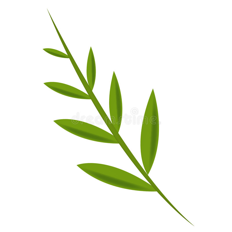 Folha verde-oliva ilustração royalty free
