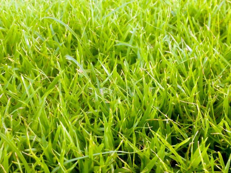 Folha verde para a textura do fundo fotografia de stock