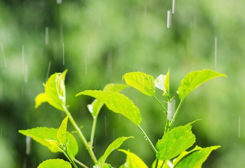 Folha verde sob gotas da chuva fotos de stock royalty free