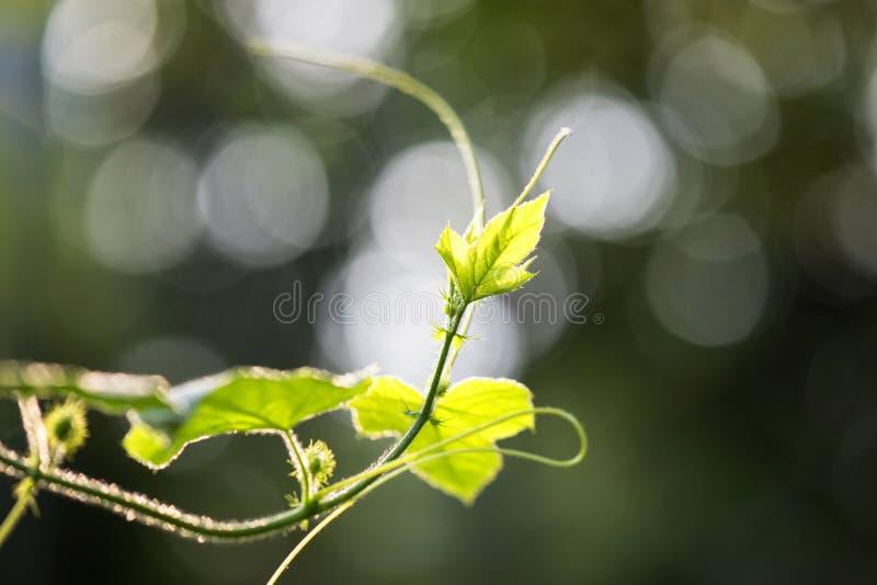 Folha verde sobre o fundo do bokeh fotografia de stock royalty free