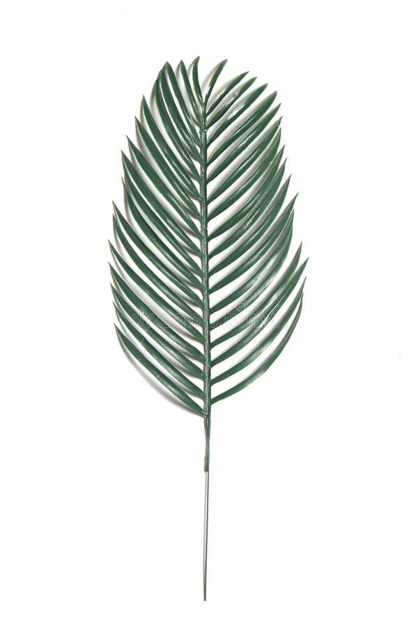 Folha verde tropical isolada em um fundo branco ilustração royalty free