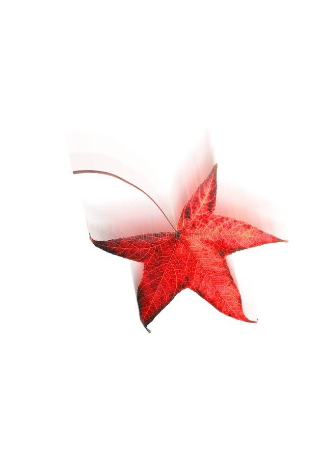 Folha vermelha de queda do outono ilustração stock