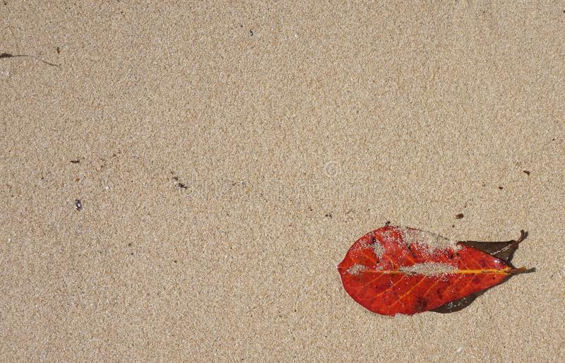 Folha vermelha no teste padrão amarelo do verão do fundo da areia fotografia de stock