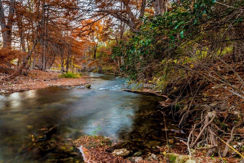 Folhagem de outono bonita em Guadalupe River, Texas foto de stock