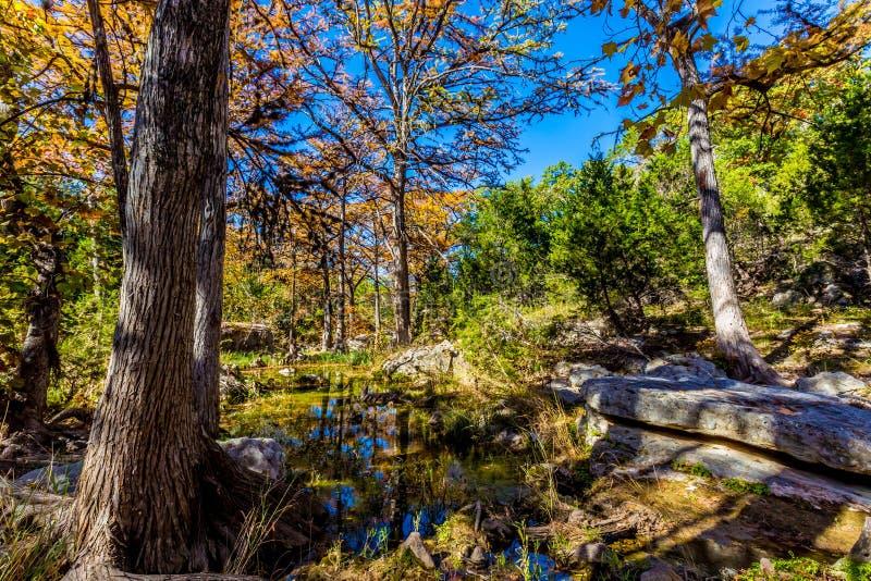 Folhagem de outono bonita em Hamilton Creek, Texas imagem de stock