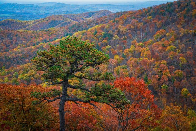 Folhagem de outono do parque nacional de Shenandoah foto de stock royalty free