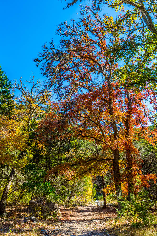 Folhagem de outono em árvores de bordo ao longo de um trajeto da sujeira imagens de stock