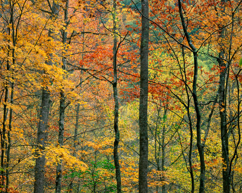 Folhagem de outono, Tennessee foto de stock