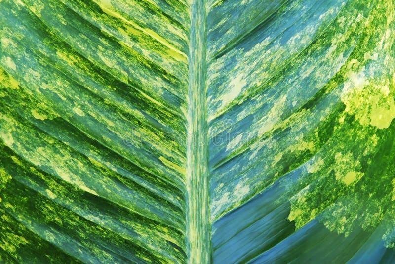 Folhagem Variada de Folhagem de Plantas Tropicais como Padrões Naturais fotos de stock royalty free