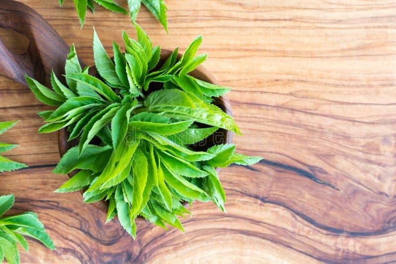Folhas à terra novas da pessoa idosa com espaço da cópia foto de stock