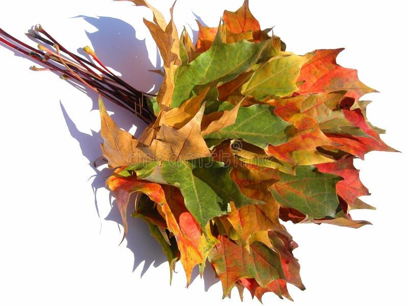 Download Folhas foto de stock. Imagem de fundo, outono, árvores, folha - 54670