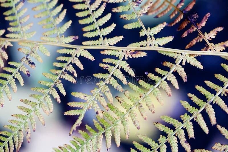 Folhas abstratas da samambaia do teste padrão Close-up fotografia de stock