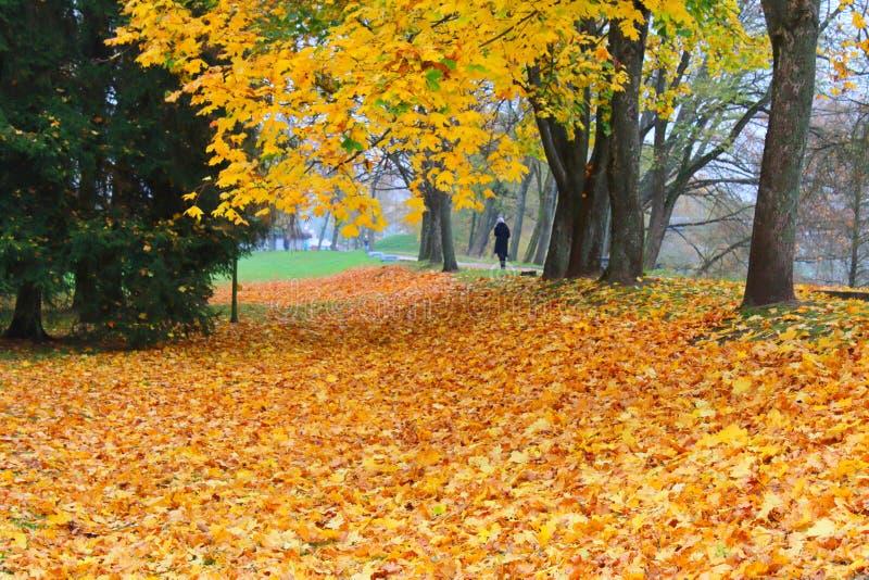 Folhas alaranjadas do outono no parque fotos de stock royalty free