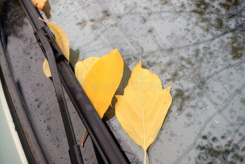 Folhas amarelas brilhantes caídas no para-brisa do carro foto de stock royalty free