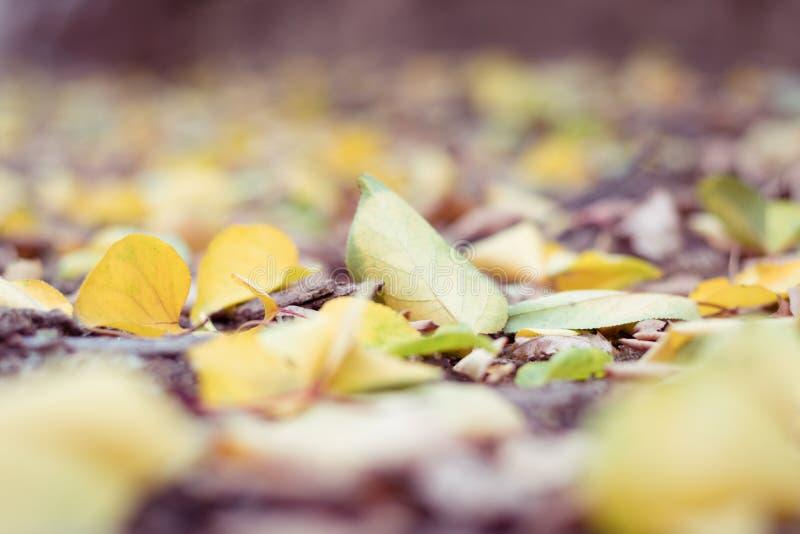 Folhas amarelas caídas de Autmn na terra fotografia de stock
